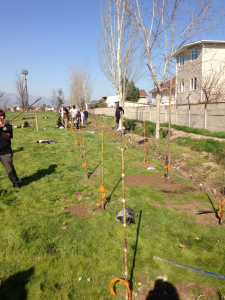 Aryana blog 4 - tree planting